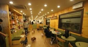 Quán cà phê cún hút khách tại Hàn Quốc