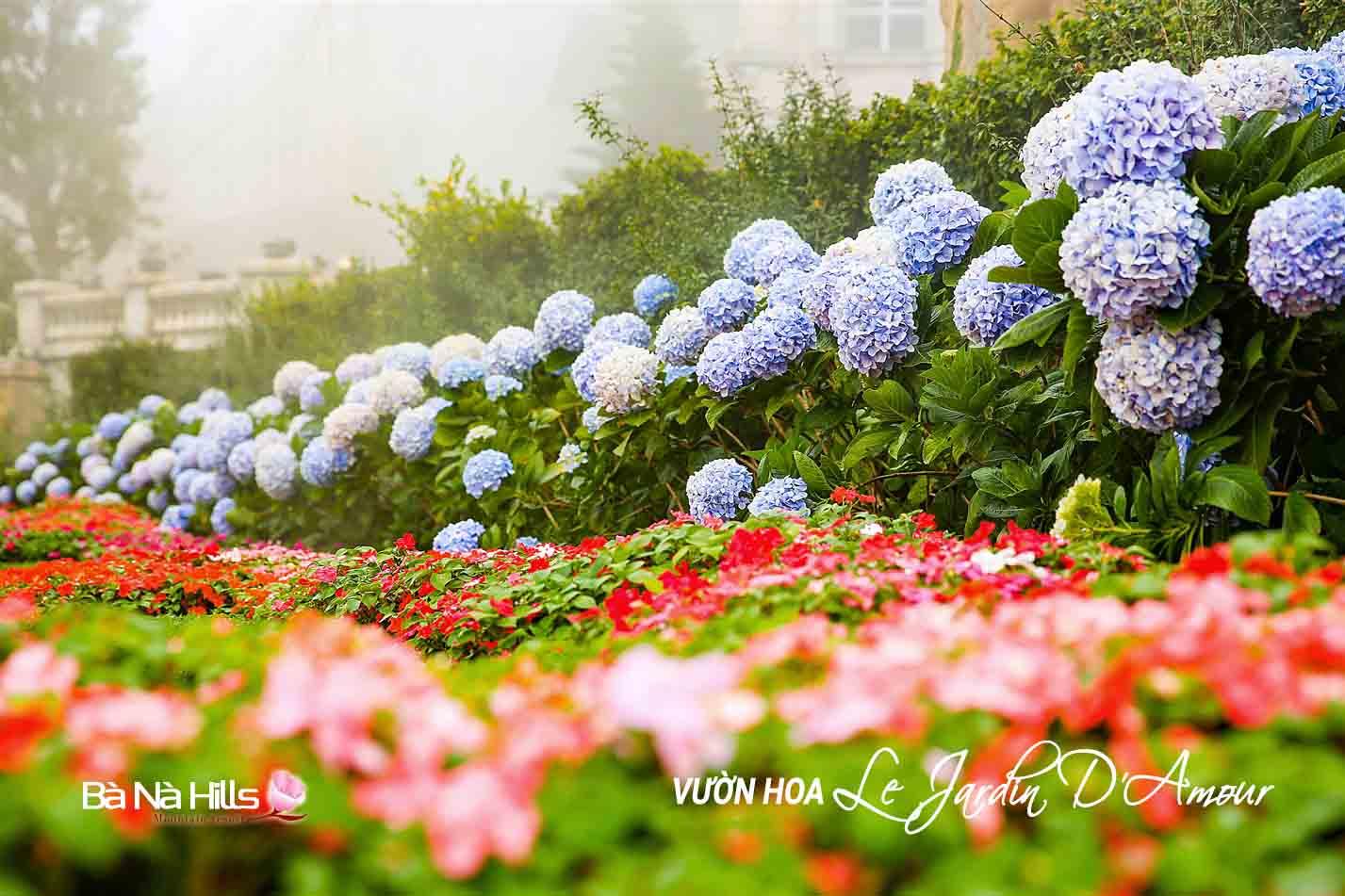 Vườn hoa Le Jardin D'Amour kinh nghiệm du lịch Bà Nà Hills